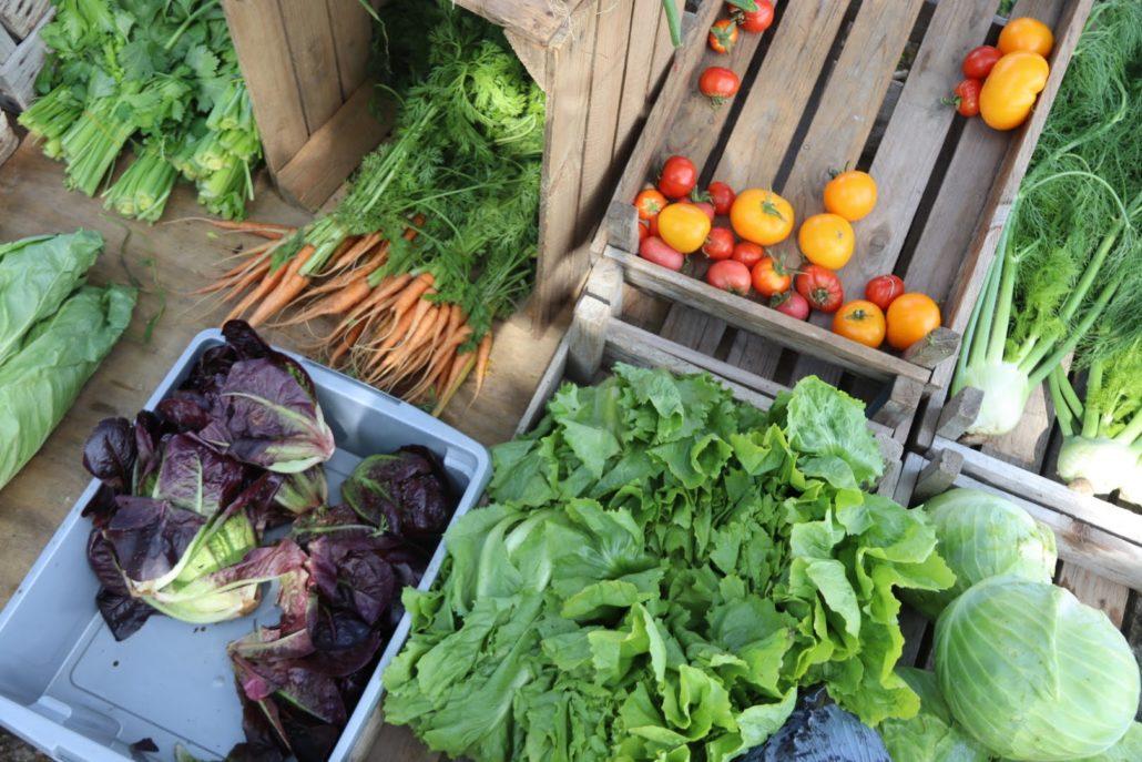 groente ynesinnefarm grou