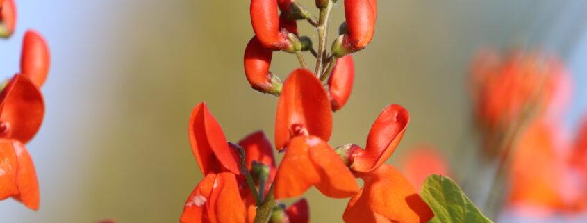 De bloeiende eetbare tuin